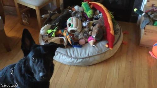 犬にお気に入りのおもちゃを選ばせたら…01