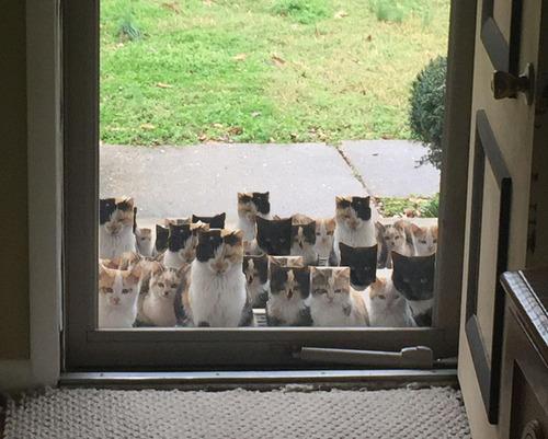野良猫が家族を連れてきた04
