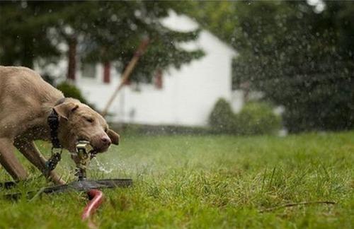 スプリンクラー犬13
