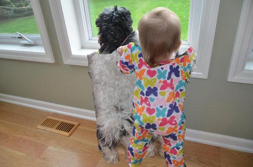 犬と赤ちゃん03