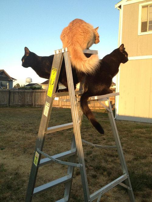 密談する猫たち11