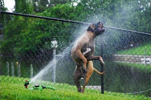 スプリンクラー犬11