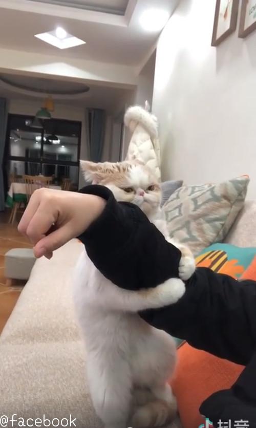 飼い主さんを離さない猫03