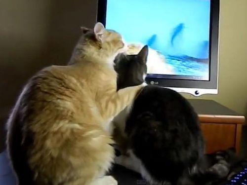 猫のモニタ画面・攻防戦06