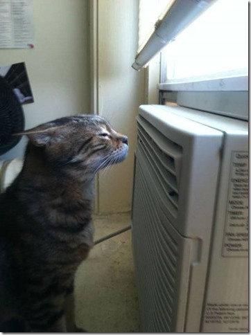 溶けそうに暑い09
