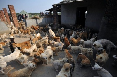 1500匹の犬と200匹の猫06