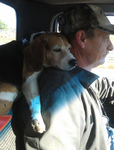 犬を飼うべき理由16