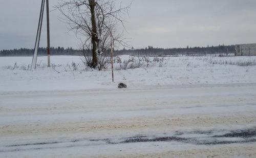 ロシアで凍り付いた猫01