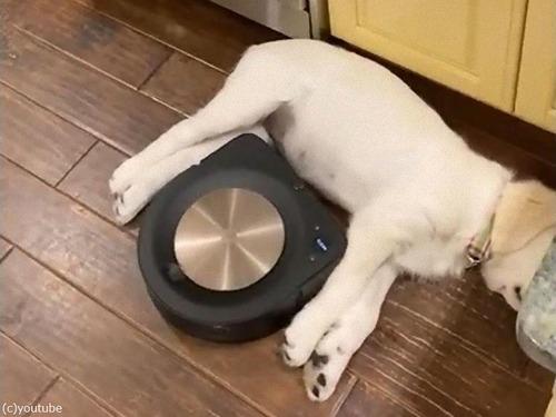 熟睡する犬とロボット掃除機04