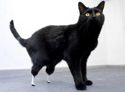 義足の猫オスカー00