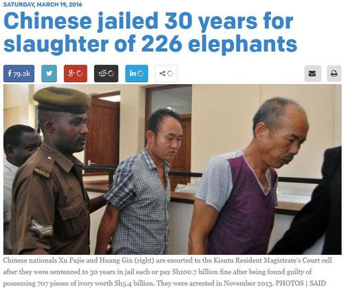 中国人2名226頭のゾウを殺した罪で30年禁固01