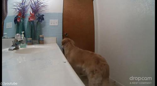 花火が怖い犬がバスルームでやり過ごす02