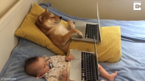 赤ちゃんと一緒にのんびりする柴犬が可愛過ぎ01