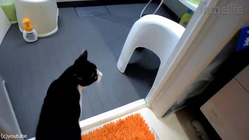 お風呂が大好きな猫01