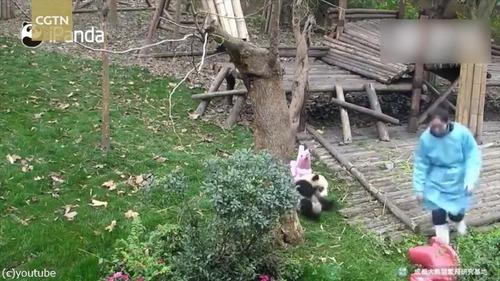 おもちゃを片付けられたパンダはこうなる01