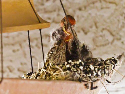 ウインドチャイムに鳥の巣05