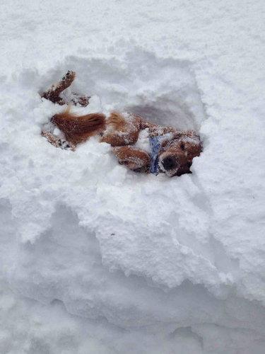 雪を喜ぶ動物08
