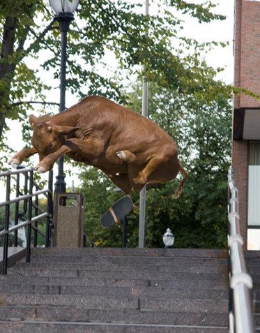 牛のジャンプ力を04