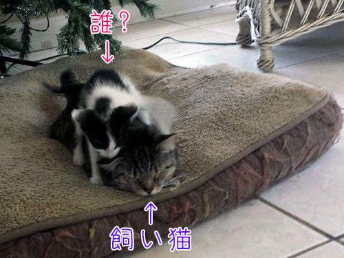 飼い猫が子猫を連れて帰ってきた00