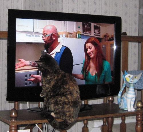 テレビを見るのを邪魔する猫02