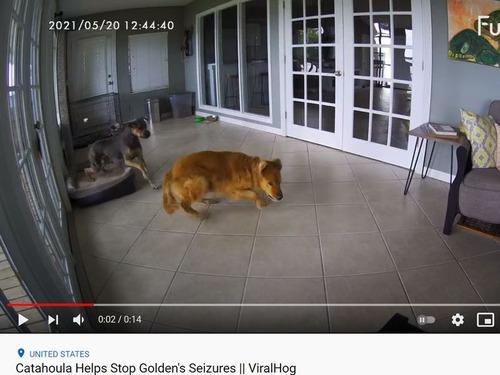 悪夢を見た犬と安心させる犬