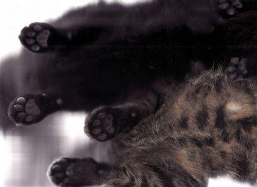 猫スキャン15