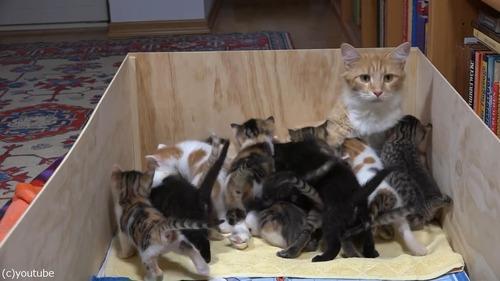14匹の子猫を育てるママ猫02