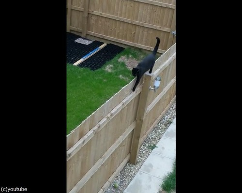 柵の上を歩く猫がちょっとおかしい01