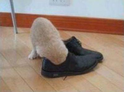 靴の臭い01