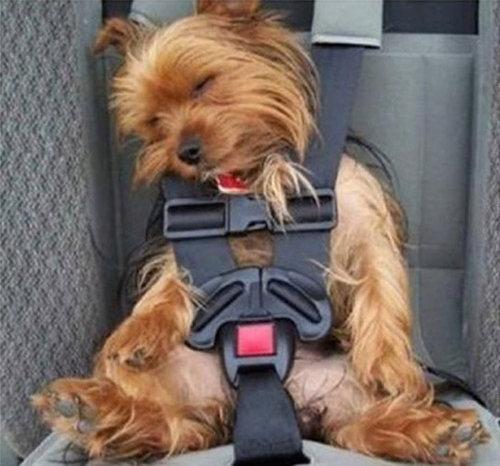 犬の寝相09
