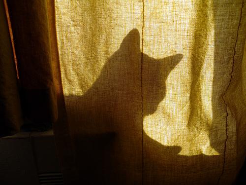 猫が見つかった00