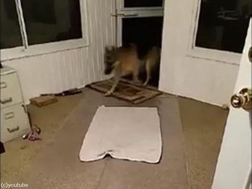 犬と敷物01