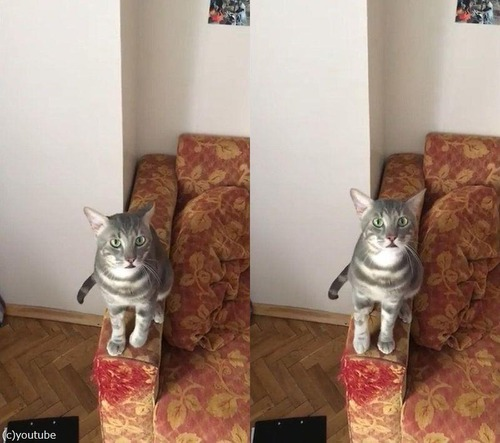 帰宅するとハグしたがる猫03