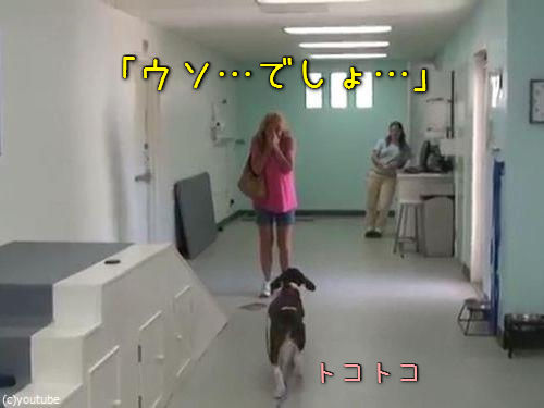 「歩けなかった犬がリハビリで歩けるように」00