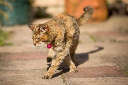 最高齢の猫04