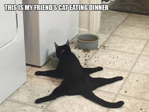 おかしな猫たち08