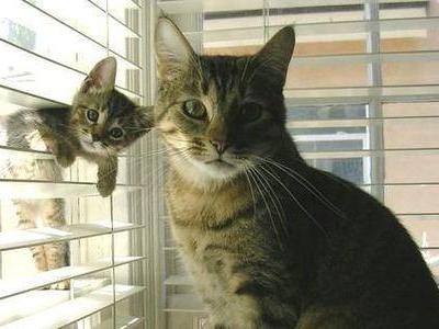 あなたを狙っている猫TOP