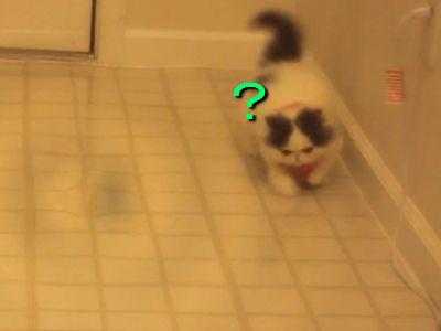 自分の影を追い求める猫
