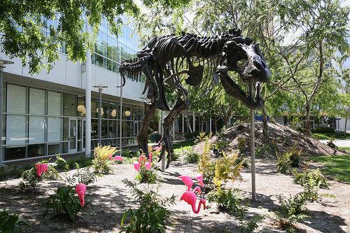 フラミンゴの群れはティラノサウルスを90秒で倒せる03