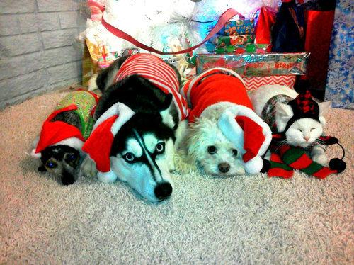12クリスマスいろいろ