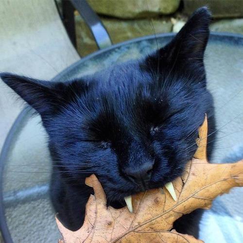 吸血鬼みたいな黒猫04