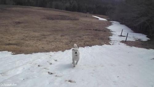 雪に大喜びの犬06