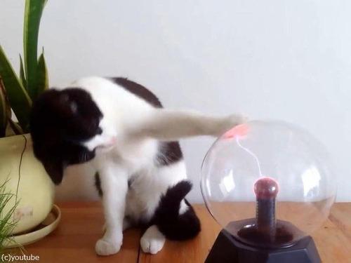 プラズマボールが気になる猫00