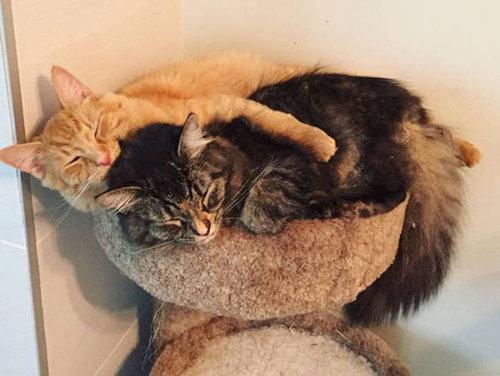 ベッドをシェアしていた子猫2匹04
