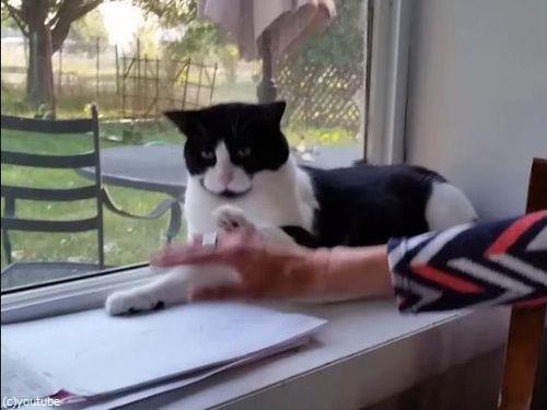 頭を撫でようとしたら…猫「ならぬ」04