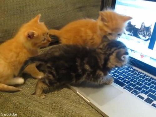 猫動画を見た子猫たち03
