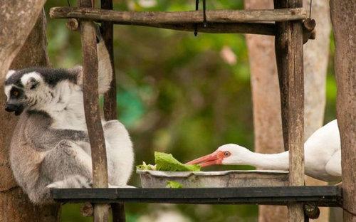 05食いしん坊で食い意地の張った動物たち