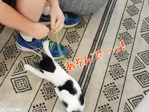 子猫のせいで靴紐が結べない00