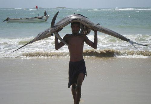 ソマリアの魚釣り05