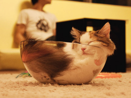 すき間にハマった猫14